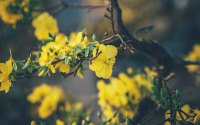 Spirit Points to Transform Feelings