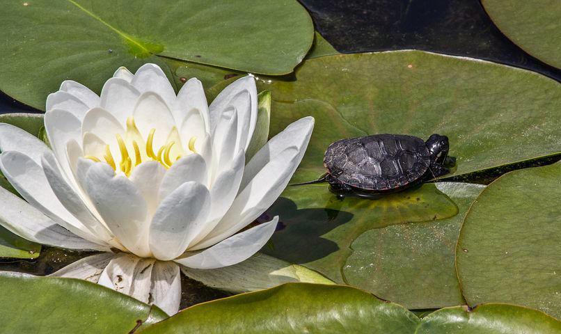 moon and lotus womens qigong class online meditation healing